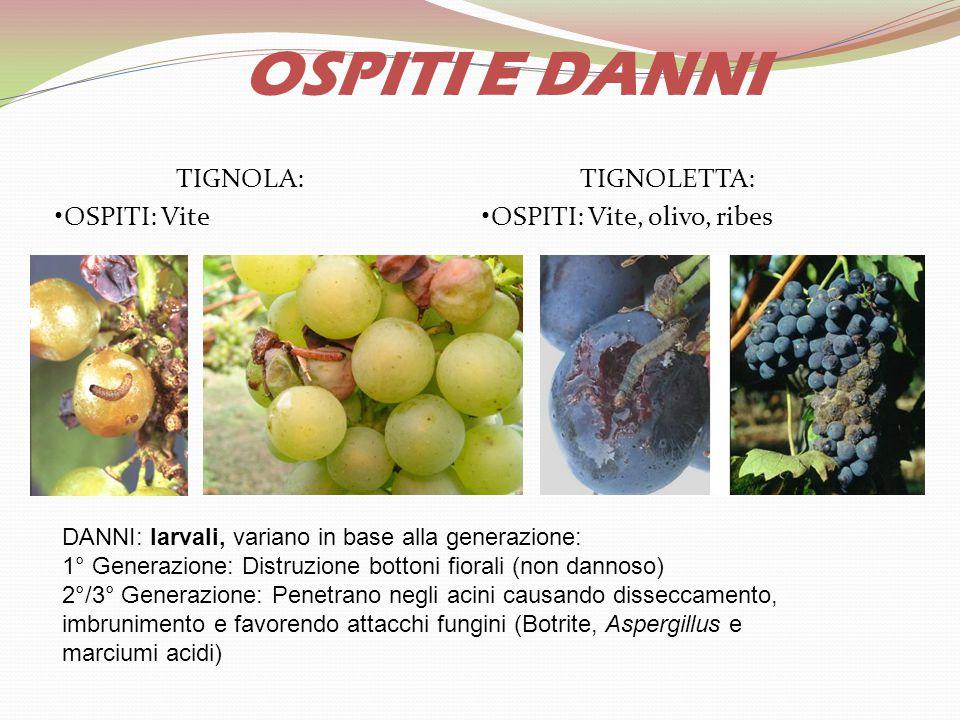 TIGNOLA: OSPITI: Vite TIGNOLETTA: OSPITI: Vite, olivo, ribes OSPITI E DANNI DANNI: larvali, variano in base alla generazione: 1° Generazione: Distruzi
