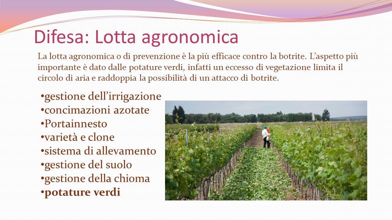 Difesa: Lotta agronomica gestione dell'irrigazione concimazioni azotate Portainnesto varietà e clone sistema di allevamento gestione del suolo gestion