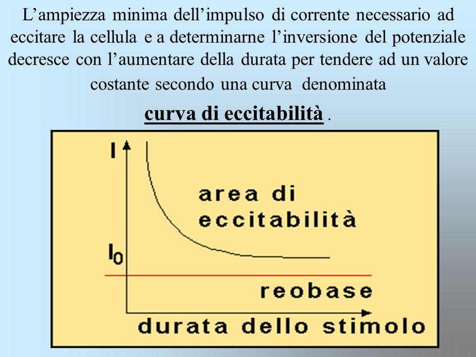 L'ampiezza minima dell'impulso di corrente necessario ad eccitare la cellula e a determinarne l'inversione del potenziale decresce con l'aumentare del