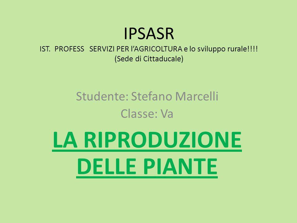 IPSASR IST.PROFESS SERVIZI PER l'AGRICOLTURA e lo sviluppo rurale!!!.