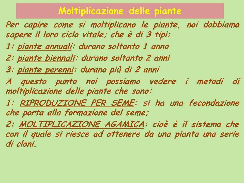 Moltiplicazione delle piante Per capire come si moltiplicano le piante, noi dobbiamo sapere il loro ciclo vitale; che è di 3 tipi: 1: piante annuali: durano soltanto 1 anno 2: piante biennali: durano soltanto 2 anni 3: piante perenni: durano più di 2 anni A questo punto noi possiamo vedere i metodi di moltiplicazione delle piante che sono: 1: RIPRODUZIONE PER SEME: si ha una fecondazione che porta alla formazione del seme; 2: MOLTIPLICAZIONE AGAMICA: cioè è il sistema che con il quale si riesce ad ottenere da una pianta una serie di cloni.