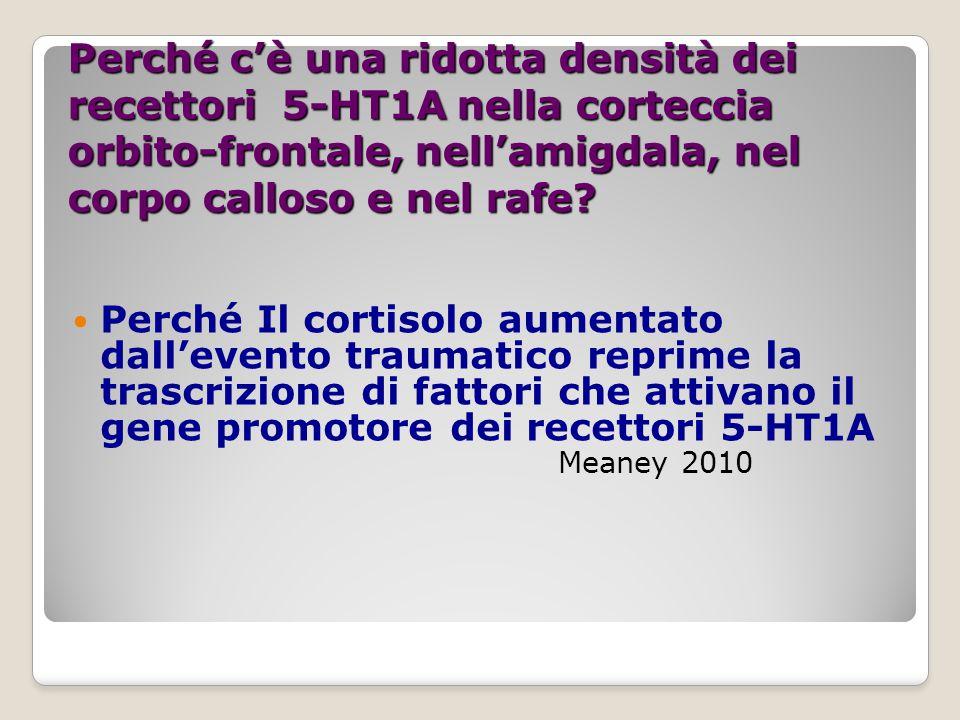 Alterazioni dimostrate:trauma e depressione 1-MODIFICAZIONE NELLA ESPRESSIONE GENETICA DEL GR GENE NELL'IPPOCAMPO Si instaura durante le prime 3 settimane di vita e la somministrazione di serotoninergici normalizza la risposta ai glucocorticoidi in topi sottoposti a stress da abbandono della figura parentale (Champagne et al.2008, Meaney,2010,Leonardo&Hen 2006) 2-RIDUZIONE DELLA DENSITA' DEI RECETTORI POST SINAPTICI 5-HT1A NELL'AMIGDALA (21%),giro del cingolo (24%), corpo calloso( 23%) nella corteccia medio- orbitale (19%) e rafe (36%) 3- Down REGULATION DEI REC.