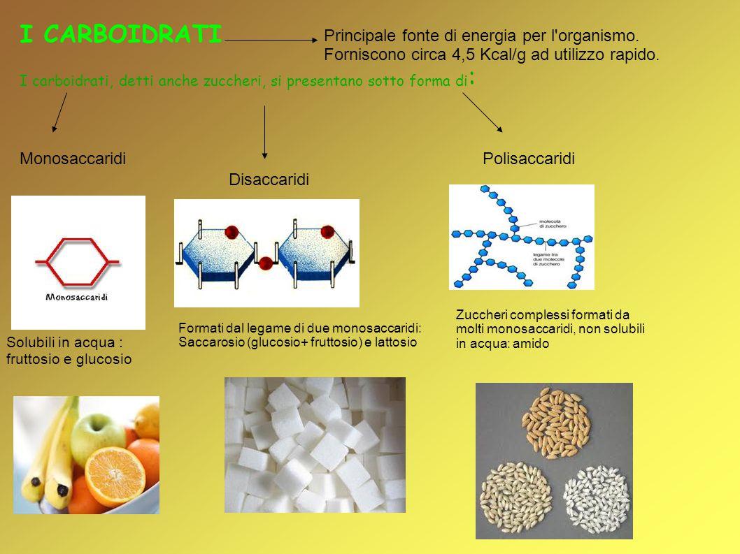 I CARBOIDRATI I carboidrati, detti anche zuccheri, si presentano sotto forma di : Monosaccaridi Disaccaridi Polisaccaridi Solubili in acqua : fruttosi