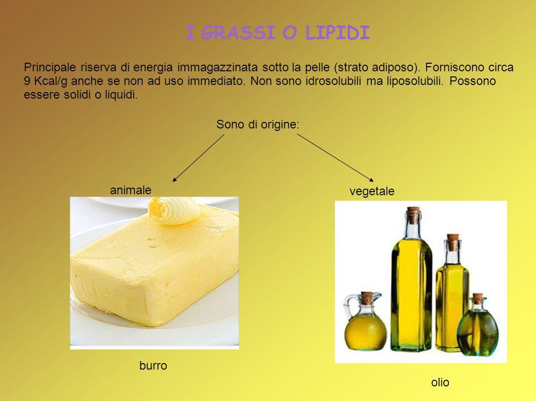 I GRASSI O LIPIDI vegetale Sono di origine: Principale riserva di energia immagazzinata sotto la pelle (strato adiposo). Forniscono circa 9 Kcal/g anc