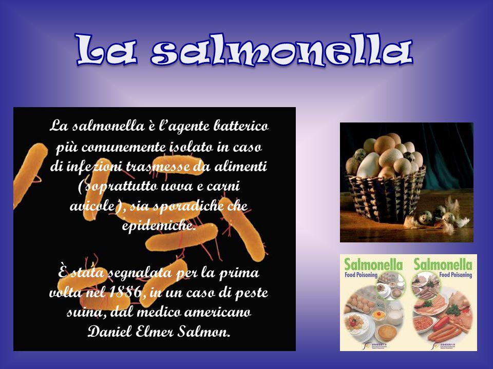 La salmonella è l'agente batterico più comunemente isolato in caso di infezioni trasmesse da alimenti (soprattutto uova e carni avicole), sia sporadic