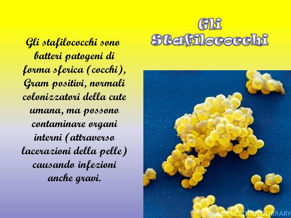 Gli stafilococchi sono batteri patogeni di forma sferica (cocchi), Gram positivi, normali colonizzatori della cute umana, ma possono contaminare organi interni (attraverso lacerazioni della pelle) causando infezioni anche gravi.