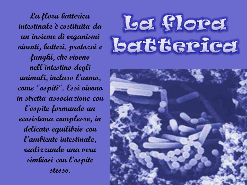 La flora batterica intestinale è costituita da un insieme di organismi viventi, batteri, protozoi e funghi, che vivono nell intestino degli animali, incluso l uomo, come ospiti .