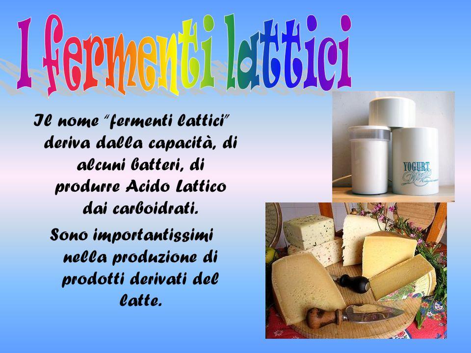 """Il nome """"fermenti lattici"""" deriva dalla capacità, di alcuni batteri, di produrre Acido Lattico dai carboidrati. Sono importantissimi nella produzione"""