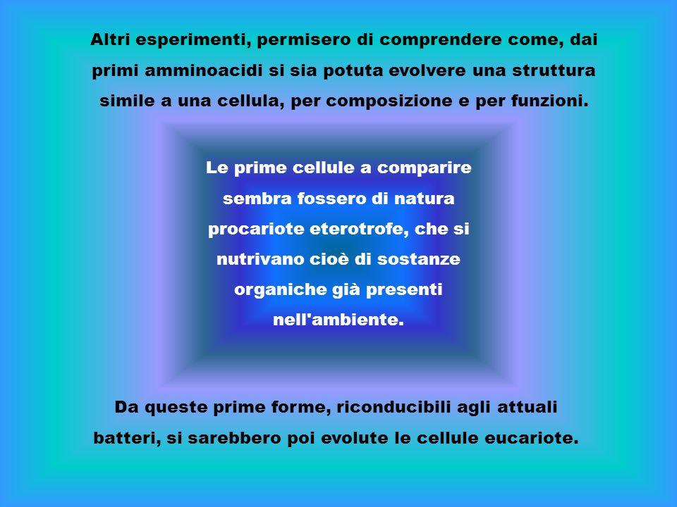 Altri esperimenti, permisero di comprendere come, dai primi amminoacidi si sia potuta evolvere una struttura simile a una cellula, per composizione e