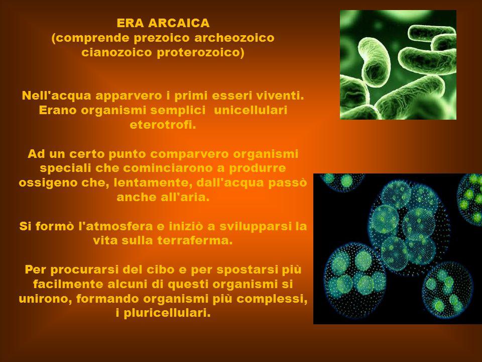 ERA ARCAICA (comprende prezoico archeozoico cianozoico proterozoico) Nell'acqua apparvero i primi esseri viventi. Erano organismi semplici unicellular