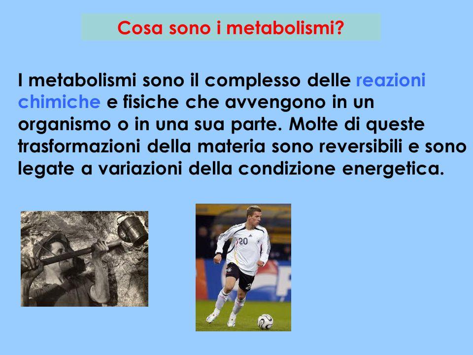 Cosa sono i metabolismi? I metabolismi sono il complesso delle reazioni chimiche e fisiche che avvengono in un organismo o in una sua parte. Molte di