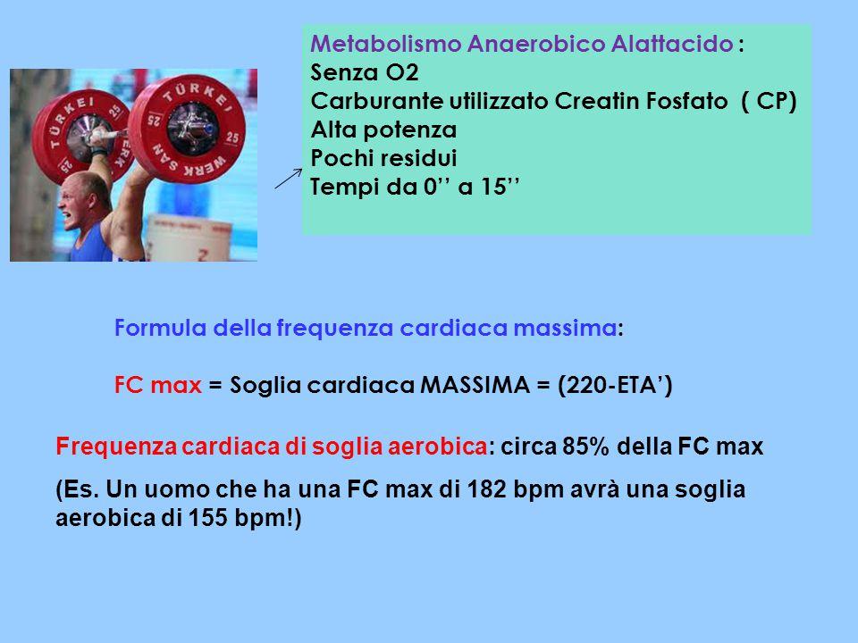 Metabolismo Anaerobico Alattacido : Senza O2 Carburante utilizzato Creatin Fosfato ( CP) Alta potenza Pochi residui Tempi da 0'' a 15'' Formula della