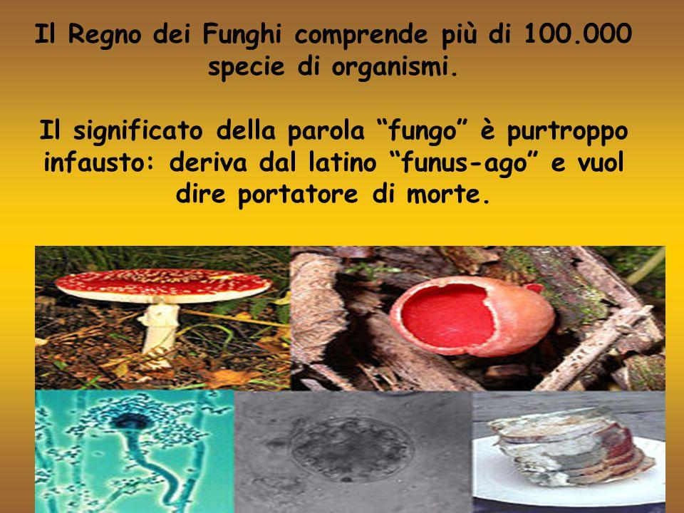 """Il Regno dei Funghi comprende più di 100.000 specie di organismi. Il significato della parola """"fungo"""" è purtroppo infausto: deriva dal latino """"funus-a"""