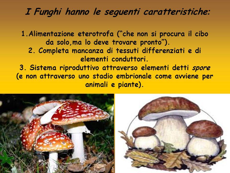 """1.Alimentazione eterotrofa (""""che non si procura il cibo da solo,ma lo deve trovare pronto""""). 2. Completa mancanza di tessuti differenziati e di elemen"""