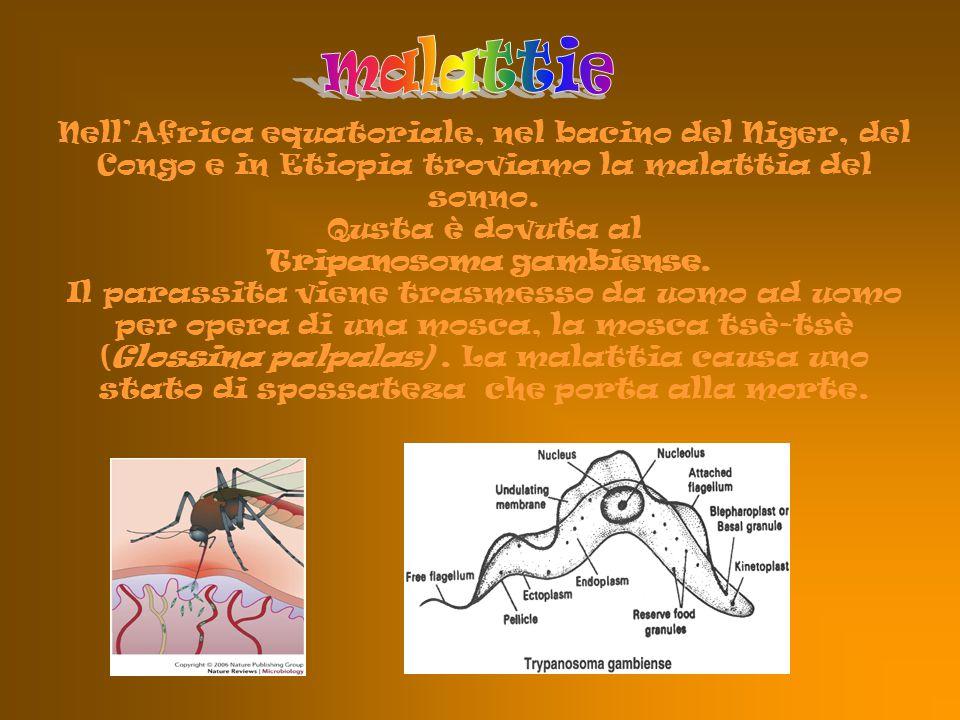 Nell'Africa equatoriale, nel bacino del Niger, del Congo e in Etiopia troviamo la malattia del sonno. Qusta è dovuta al Tripanosoma gambiense. Il para