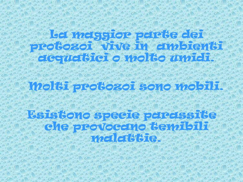 A partire dal meno evoluto al più evoluto si dividono in: Flagellati, Sarcodini, Sporozoi, Infusori.