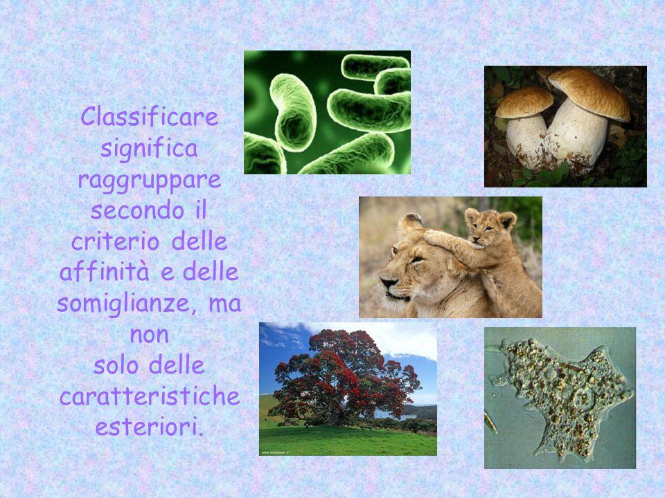Classificare significa raggruppare secondo il criterio delle affinità e delle somiglianze, ma non solo delle caratteristiche esteriori.