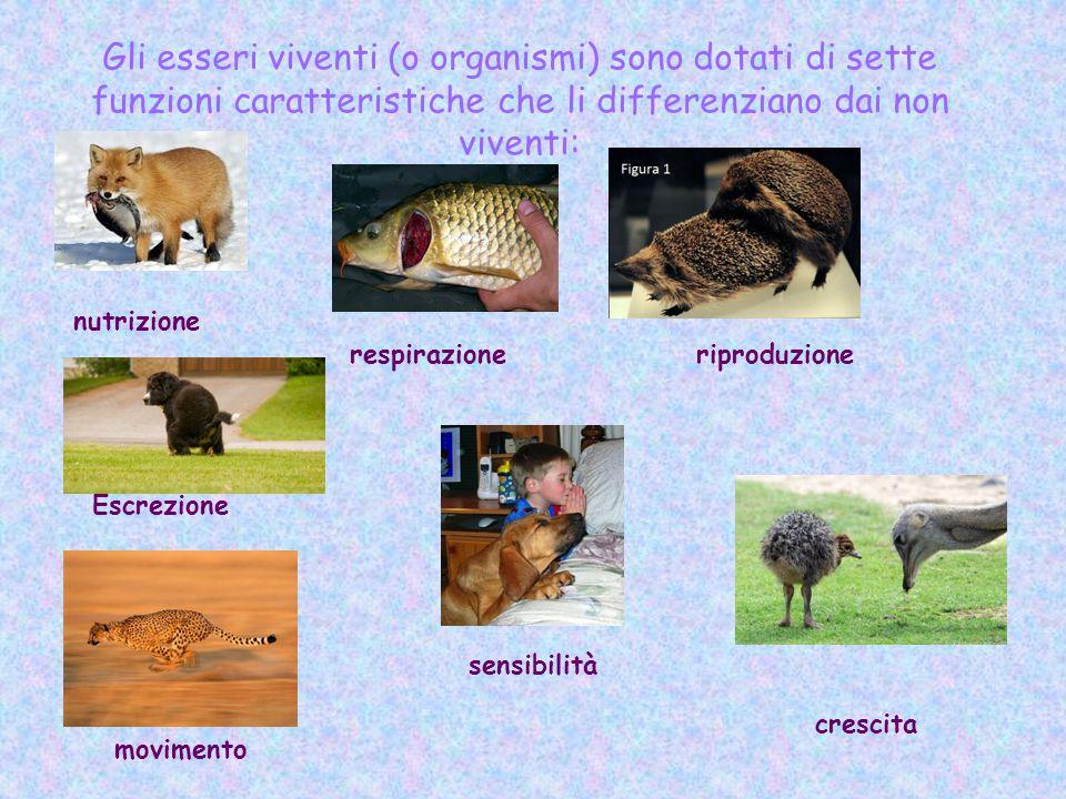 Gli esseri viventi (o organismi) sono dotati di sette funzioni caratteristiche che li differenziano dai non viventi: nutrizione respirazioneriproduzio