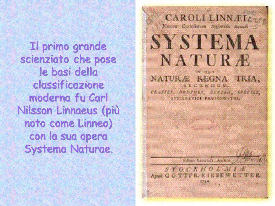 Il primo grande scienziato che pose le basi della classificazione moderna fu Carl Nilsson Linnaeus (più noto come Linneo) con la sua opera Systema Nat