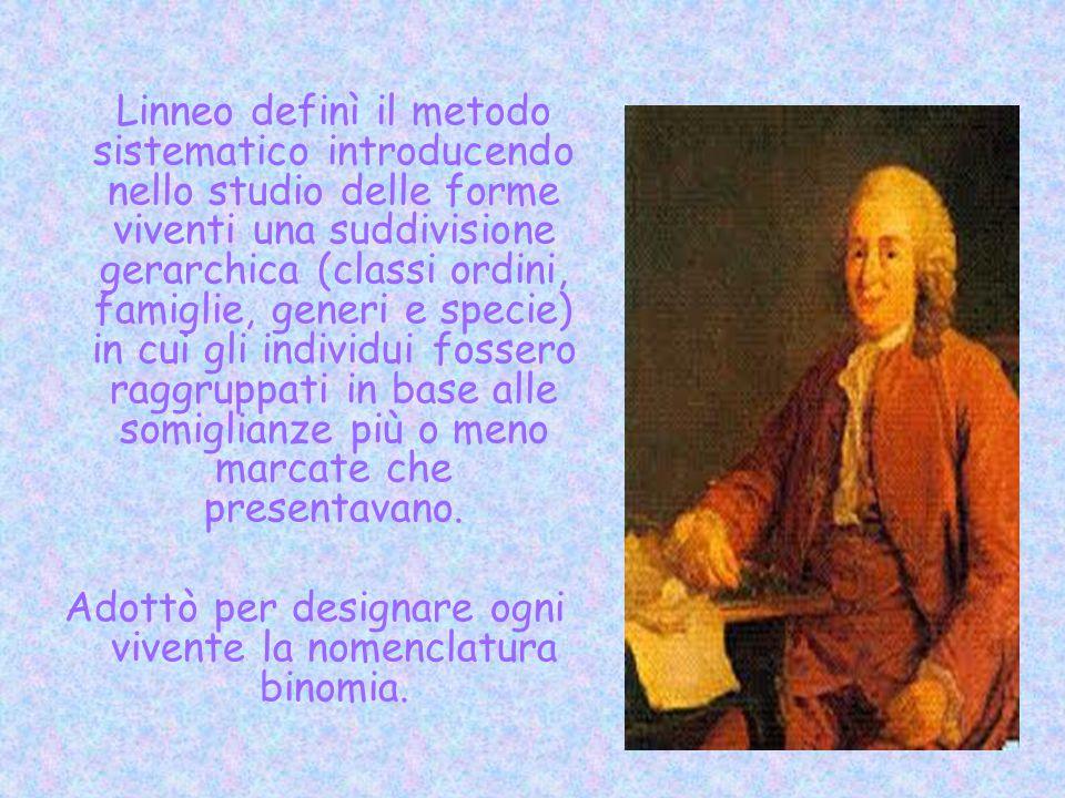 Linneo definì il metodo sistematico introducendo nello studio delle forme viventi una suddivisione gerarchica (classi ordini, famiglie, generi e speci