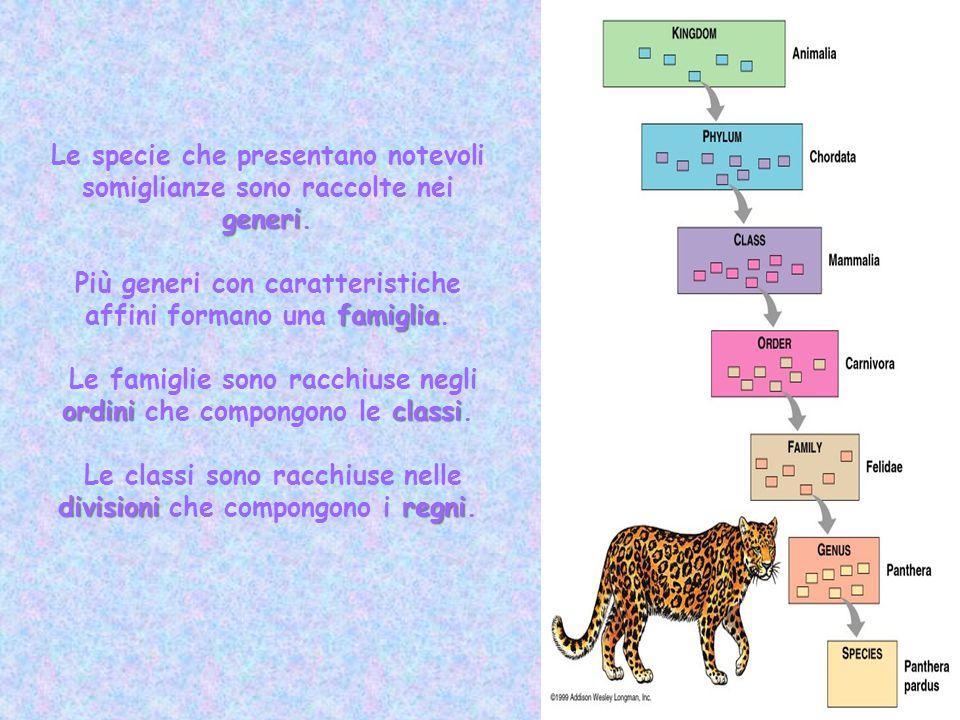 generi Le specie che presentano notevoli somiglianze sono raccolte nei generi. famiglia Più generi con caratteristiche affini formano una famiglia. or