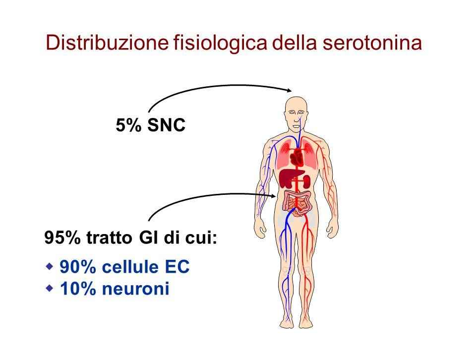 Distribuzione fisiologica della serotonina 5% SNC 95% tratto GI di cui:  90% cellule EC  10% neuroni