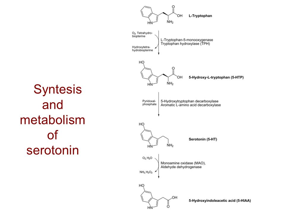 Syntesis and metabolism of serotonin