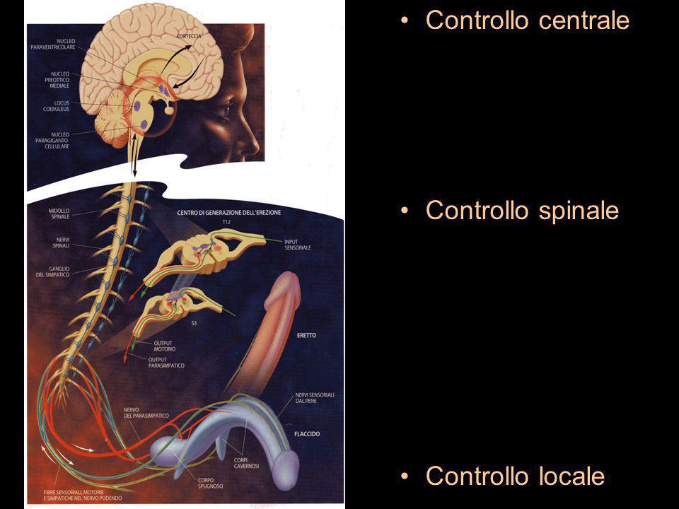 Terapia della disfunzione erettile (II) Modificare lo stile di vita: abolire fumo ridurre alcool abolire droghe controllo peso corporeo attività fisica