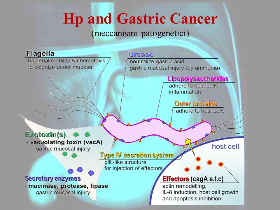 Hp and Gastric Cancer (meccanismi patogenetici)