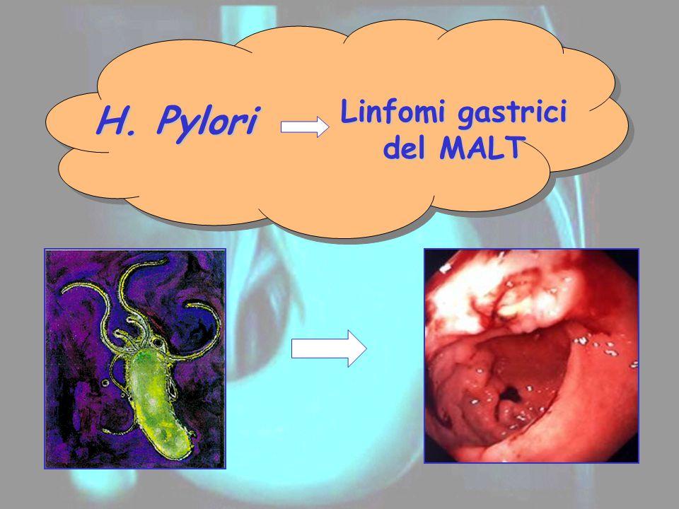 H. Pylori Linfomi gastrici del MALT
