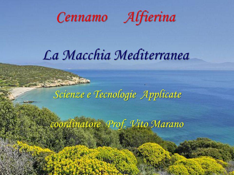 Cennamo Alfierina La Macchia Mediterranea Scienze e Tecnologie Applicate coordinatore Prof.