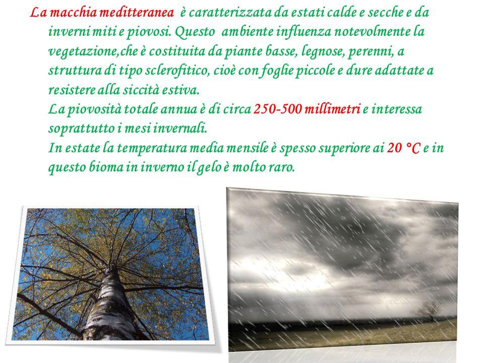 La macchia meditteranea è caratterizzata da estati calde e secche e da inverni miti e piovosi. Questo ambiente influenza notevolmente la vegetazione,c