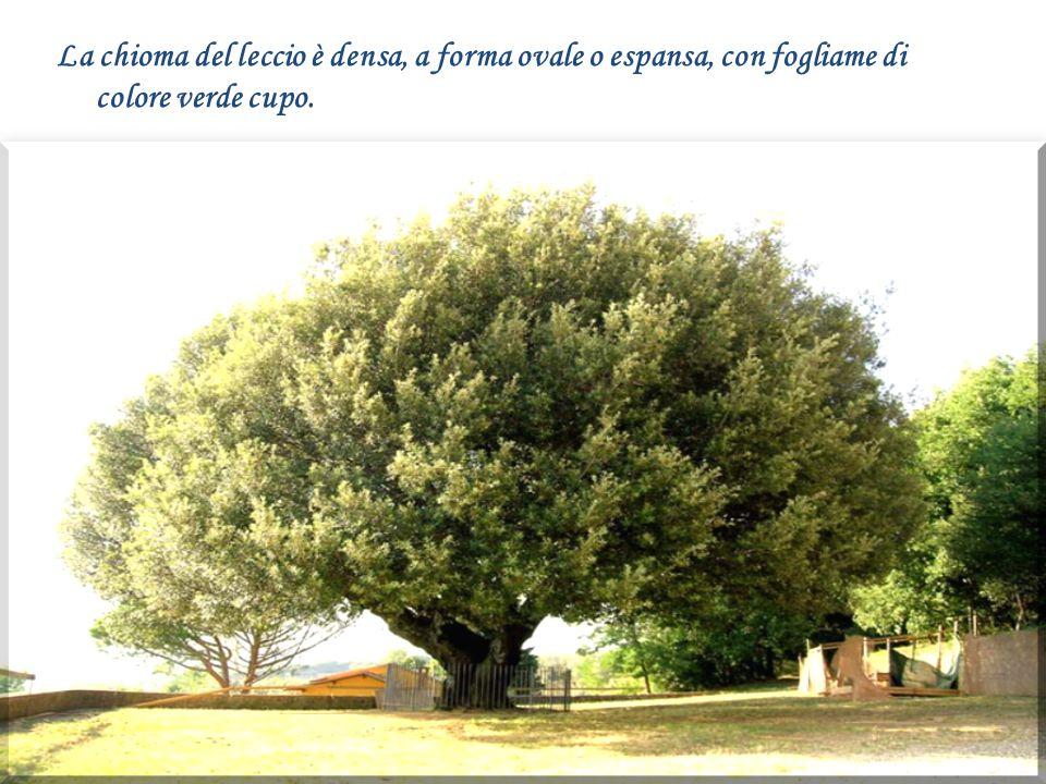 Citazione Fonti Appunti testi tratti da: i t.wikipedia.org w ww.iisferraris.it k idslink.scuola.bo.it w ww.gisrdinaggio.it w ww.frantoiodelveio.it t ius.it w ww.elicriso.it w ww.pollicegreen.com w ww.agraria.org w ww.giardinaggio.net w ww.spaziopiante.com w ww.provincia.grosseto.it w ww.thais.it k idslink.bo.cnr.it