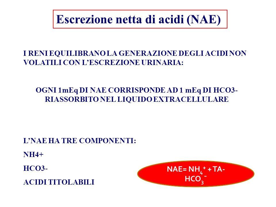 Escrezione netta di acidi (NAE) I RENI EQUILIBRANO LA GENERAZIONE DEGLI ACIDI NON VOLATILI CON L'ESCREZIONE URINARIA: OGNI 1mEq DI NAE CORRISPONDE AD