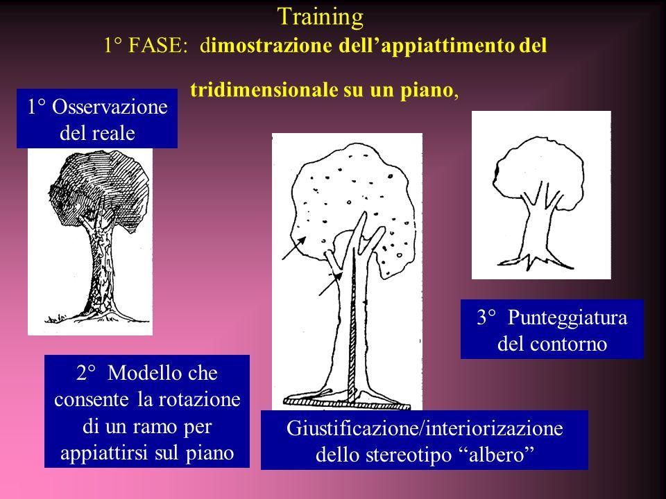 Training 1° FASE: dimostrazione dell'appiattimento del tridimensionale su un piano, Giustificazione/interiorizazione dello stereotipo albero 1° Osservazione del reale 2° Modello che consente la rotazione di un ramo per appiattirsi sul piano 3° Punteggiatura del contorno