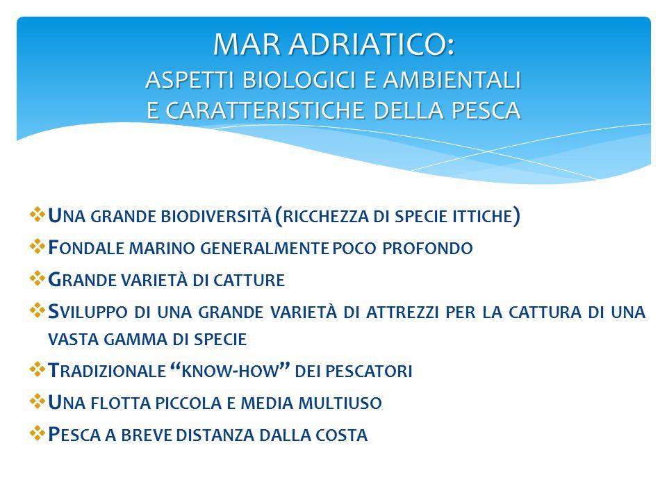 MAR ADRIATICO: ASPETTI BIOLOGICI E AMBIENTALI E CARATTERISTICHE DELLA PESCA  U NA GRANDE BIODIVERSITÀ ( RICCHEZZA DI SPECIE ITTICHE )  F ONDALE MARI