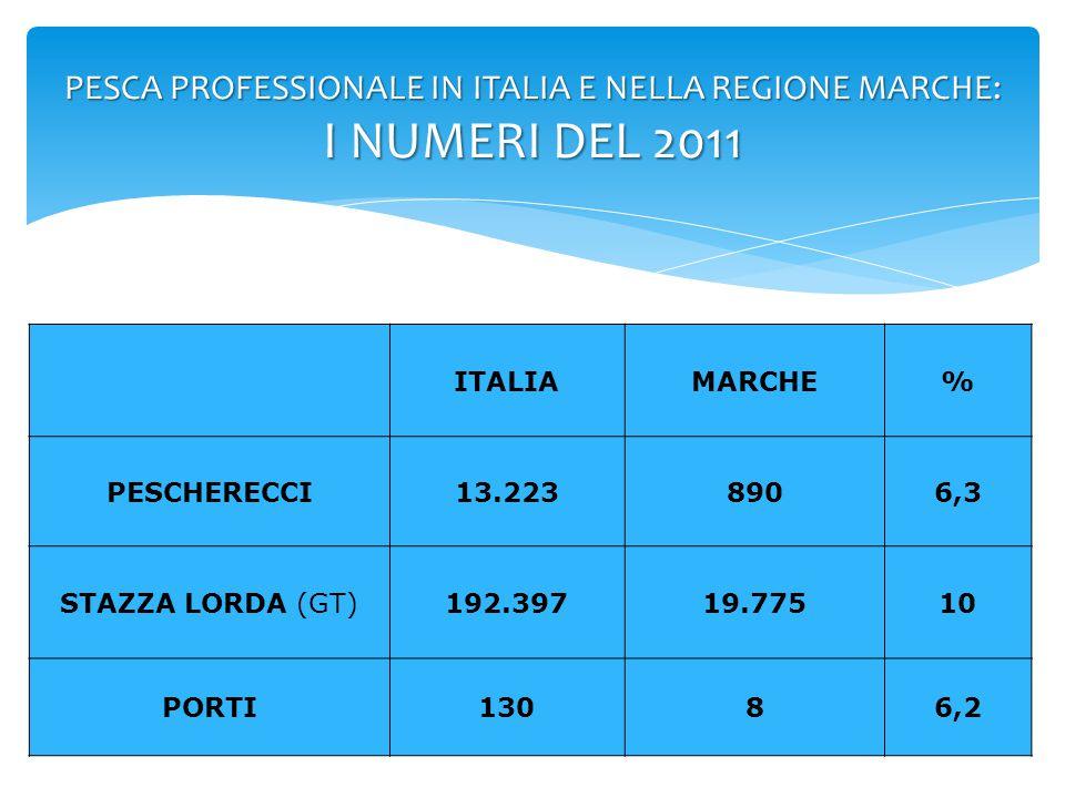 PESCA PROFESSIONALE IN ITALIA E NELLA REGIONE MARCHE: I NUMERI DEL 2011 ITALIAMARCHE% PESCATORI28.9822.1007,2 CATTURE (TONNELLATE) 224.75824.70510,9 RICAVI (MILIONI DI €) 1.115109,339,8