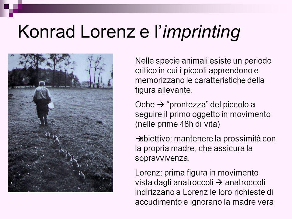 Konrad Lorenz e l'imprinting Nelle specie animali esiste un periodo critico in cui i piccoli apprendono e memorizzano le caratteristiche della figura allevante.
