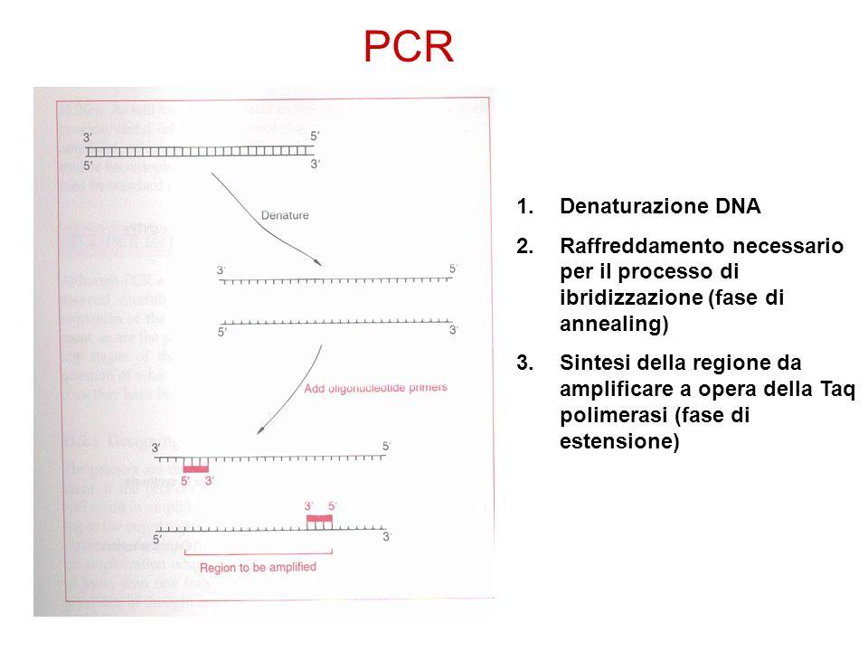 1.Denaturazione DNA 2.Raffreddamento necessario per il processo di ibridizzazione (fase di annealing) 3.Sintesi della regione da amplificare a opera d