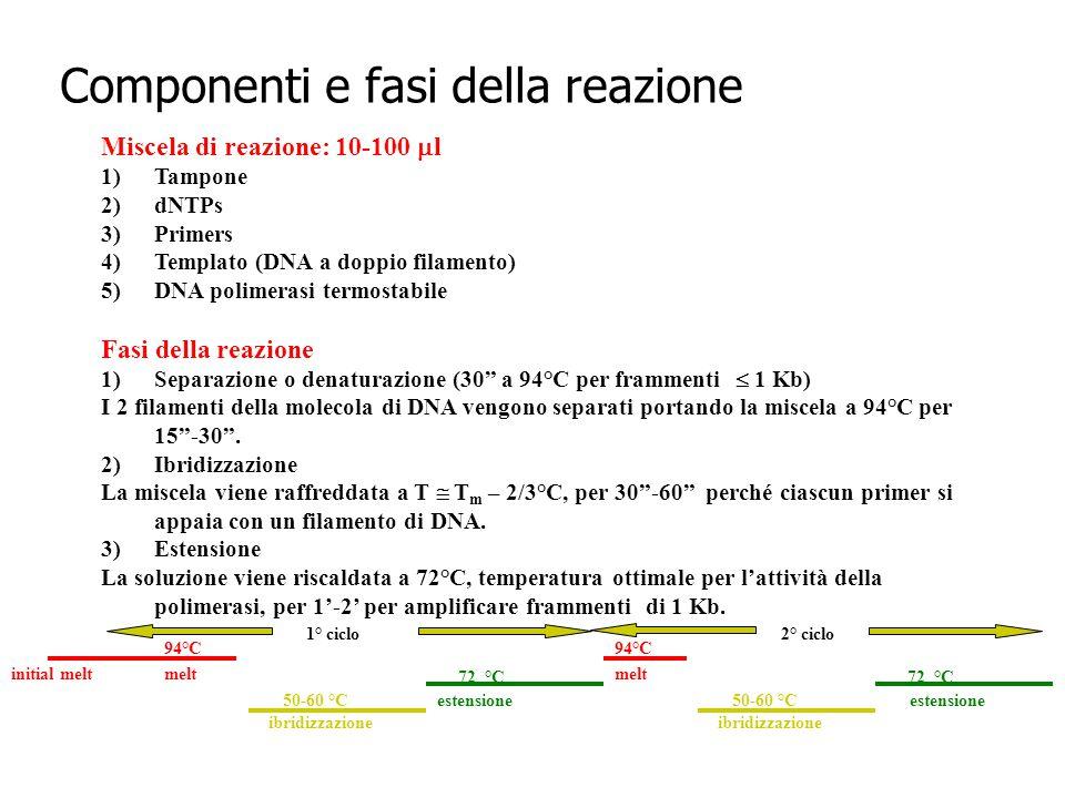 Componenti e fasi della reazione Miscela di reazione: 10-100  l 1)Tampone 2)dNTPs 3)Primers 4)Templato (DNA a doppio filamento) 5)DNA polimerasi term