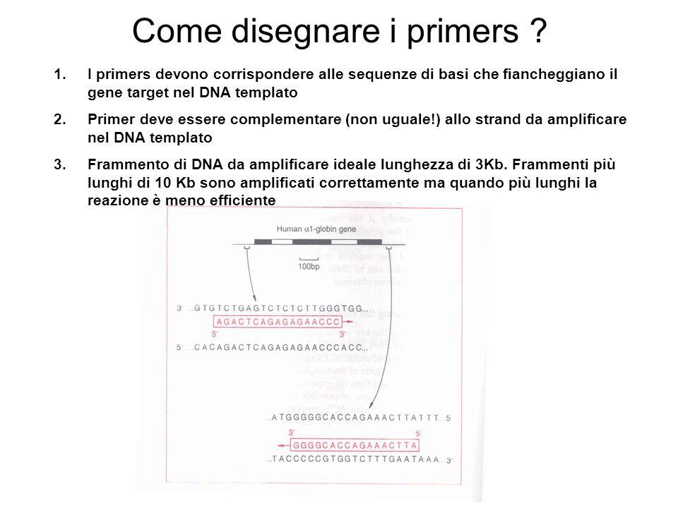 Come disegnare i primers ? 1.I primers devono corrispondere alle sequenze di basi che fiancheggiano il gene target nel DNA templato 2.Primer deve esse