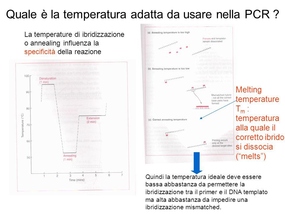 Quale è la temperatura adatta da usare nella PCR ? La temperature di ibridizzazione o annealing influenza la specificità della reazione Quindi la temp