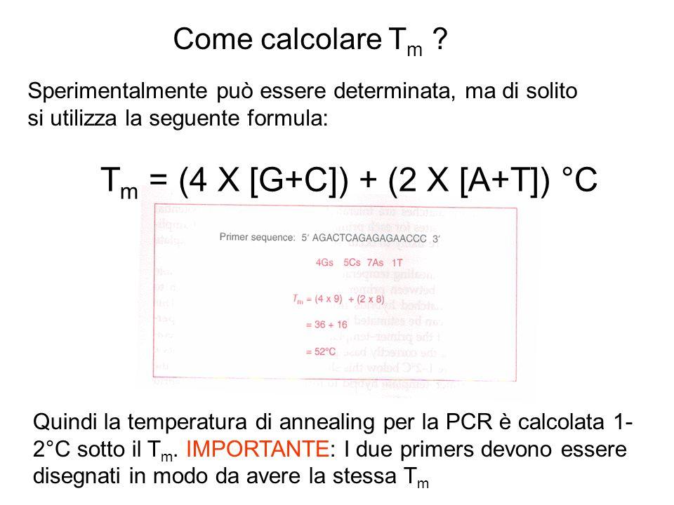 Come calcolare T m ? Quindi la temperatura di annealing per la PCR è calcolata 1- 2°C sotto il T m. IMPORTANTE: I due primers devono essere disegnati