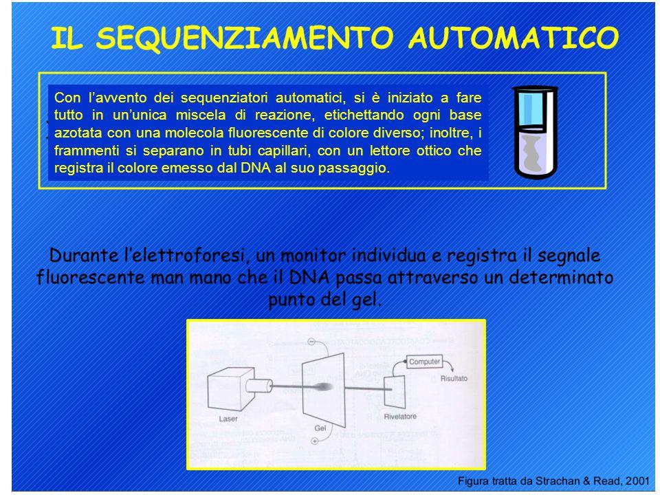 Con l'avvento dei sequenziatori automatici, si è iniziato a fare tutto in un'unica miscela di reazione, etichettando ogni base azotata con una molecol
