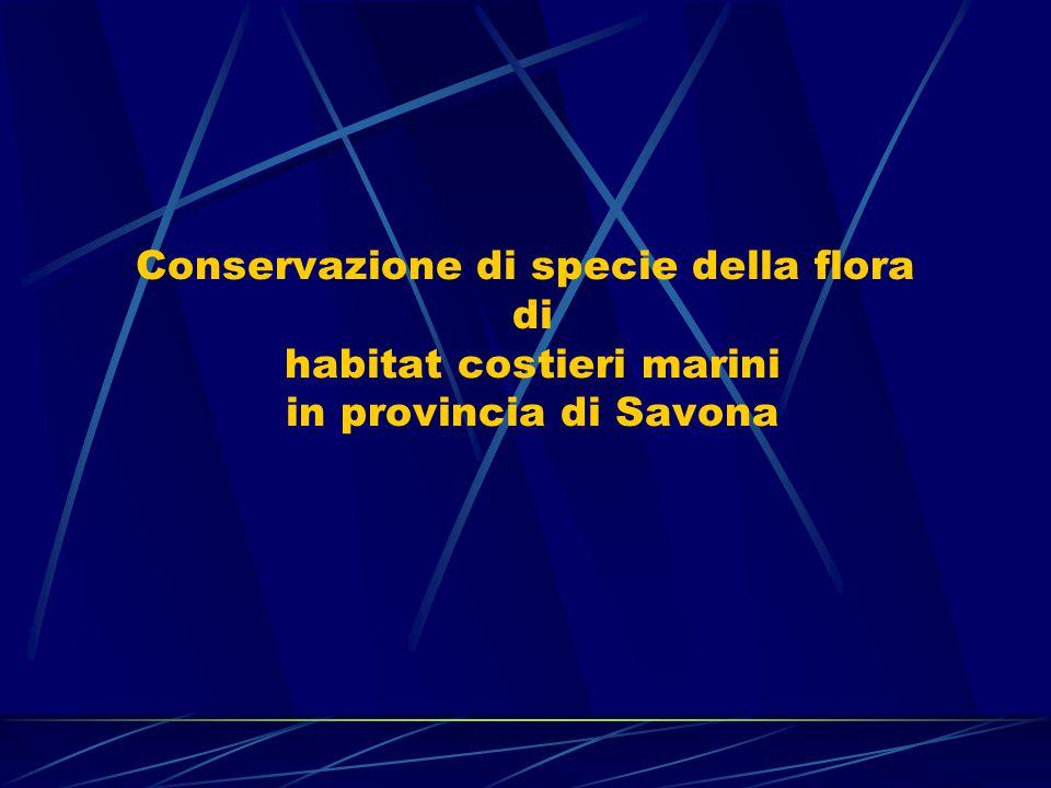 Conservazione di specie della flora di habitat costieri marini in provincia di Savona