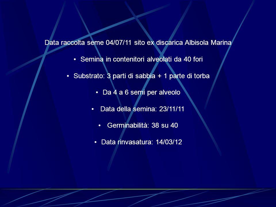 Data raccolta seme 04/07/11 sito ex discarica Albisola Marina Semina in contenitori alveolati da 40 fori Substrato: 3 parti di sabbia + 1 parte di torba Da 4 a 6 semi per alveolo Data della semina: 23/11/11 Germinabilità: 38 su 40 Data rinvasatura: 14/03/12