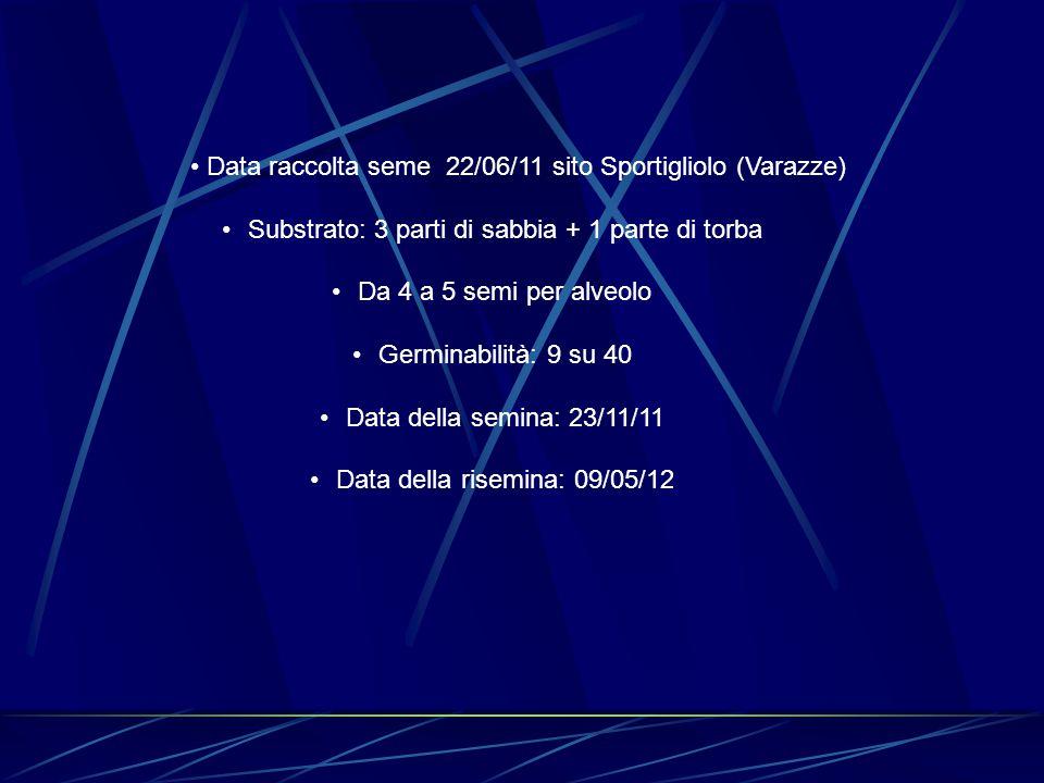 Data raccolta seme 22/06/11 sito Sportigliolo (Varazze) Substrato: 3 parti di sabbia + 1 parte di torba Da 4 a 5 semi per alveolo Germinabilità: 9 su 40 Data della semina: 23/11/11 Data della risemina: 09/05/12