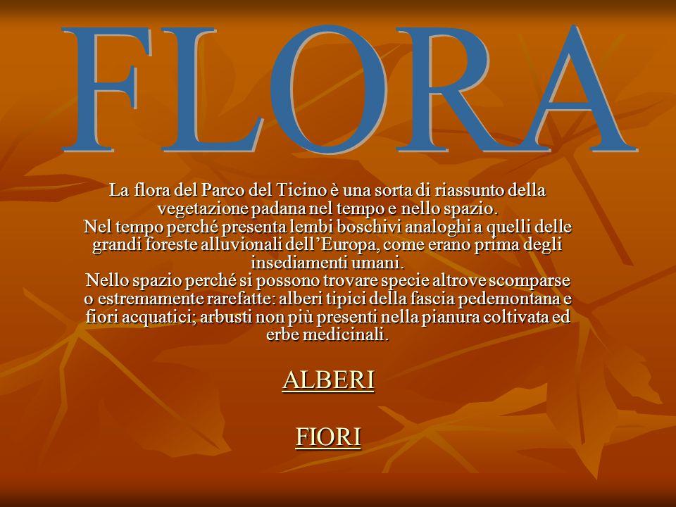 La flora del Parco del Ticino è una sorta di riassunto della vegetazione padana nel tempo e nello spazio. Nel tempo perché presenta lembi boschivi ana