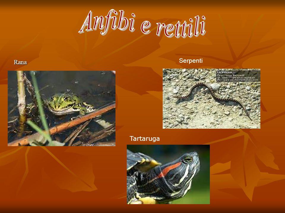 Rana Rana Serpenti Tartaruga