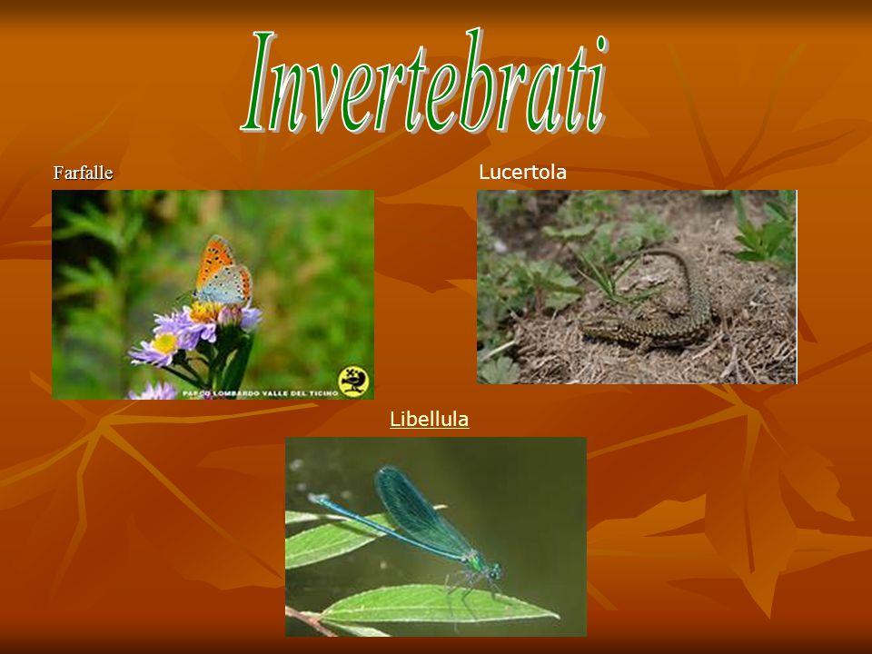 Farfalle Lucertola Libellula